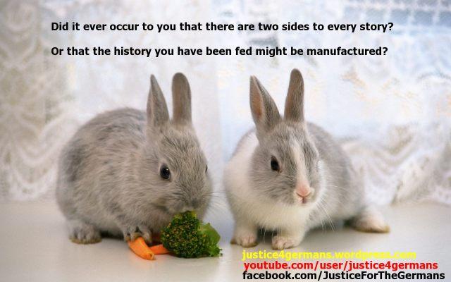 Bunny Truth 03